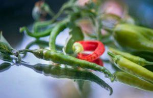 Jak hodować papryczki habanero - co na ten temat wiedzieć warto?